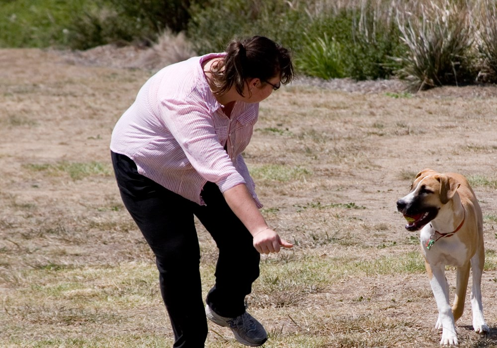 Dog training and obedience classes