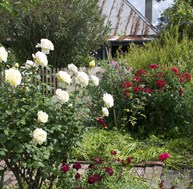 Ziebell's Farmhouse - Open Garden Day